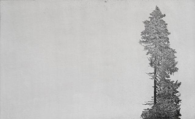 Ticho, čárový lept, 2017 (80 x 50 cm)
