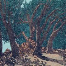 Olivový strom,barevný linoryt, 47x63,5,2014