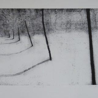 Borová lada, hlubotisk, 2007