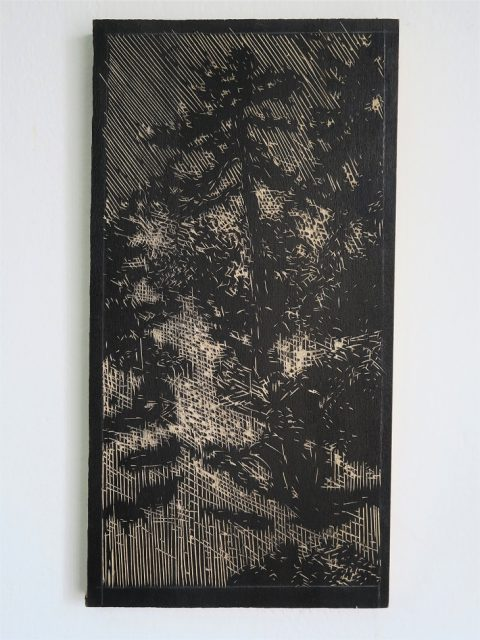 Borovice. 2016, rytá dřevěná deska, březové dřevo, tuš, 18 x 35 cm
