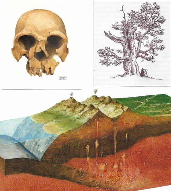 vědecká ilustrace