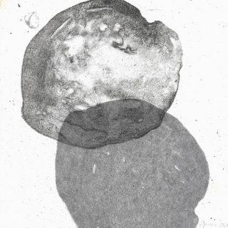 krupicova (2)s