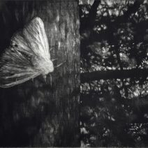 falusiova - nocni motyl (3)d